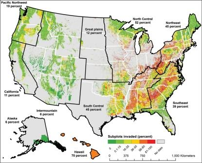 Invasive Plants of US Forests